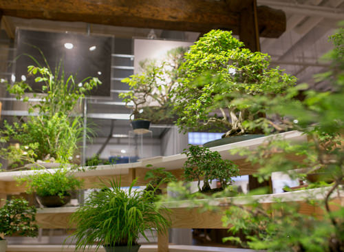 盆栽のイメージ