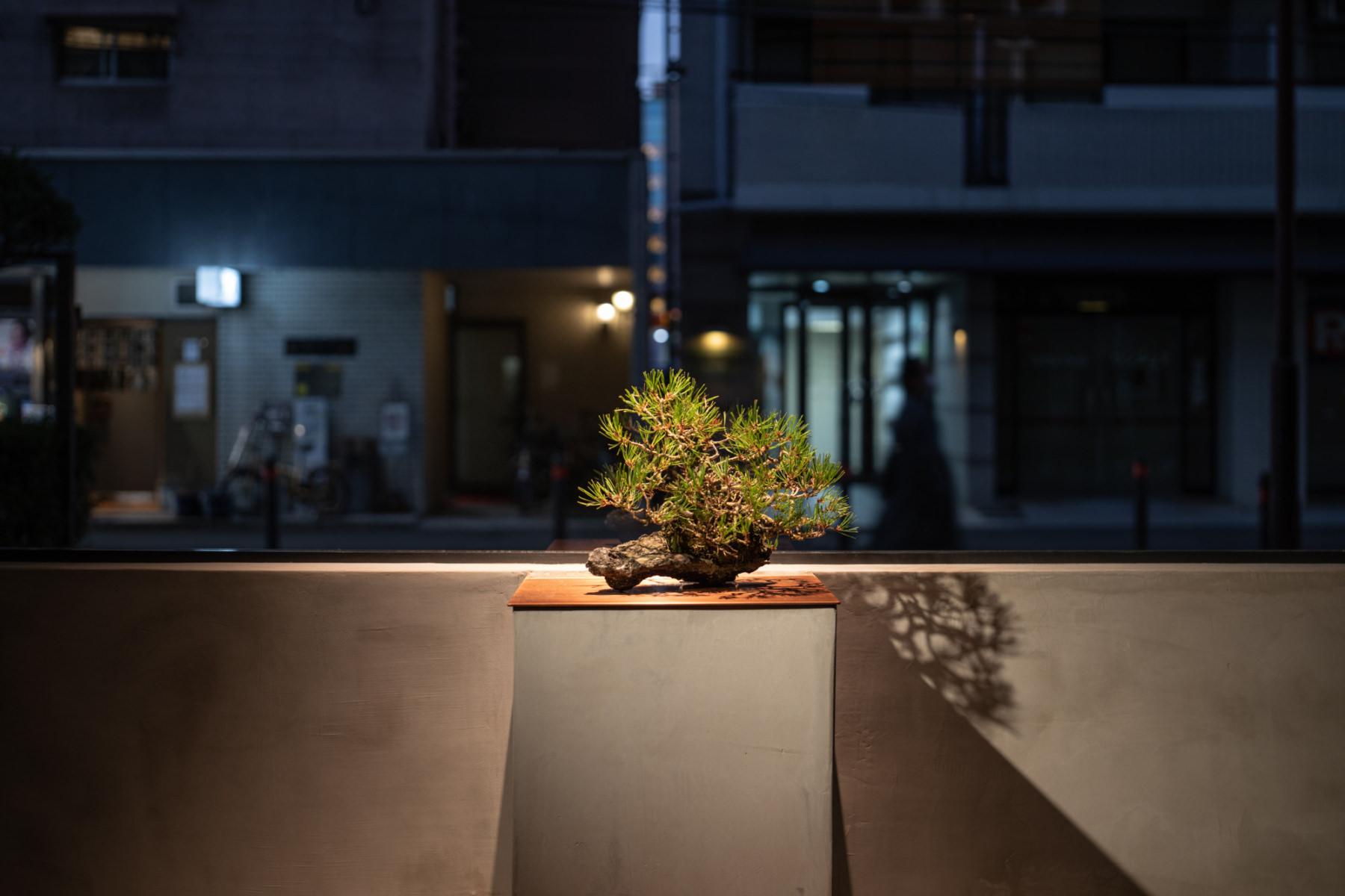 La collection Kuninori Mayumi