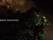 夜の盆栽展